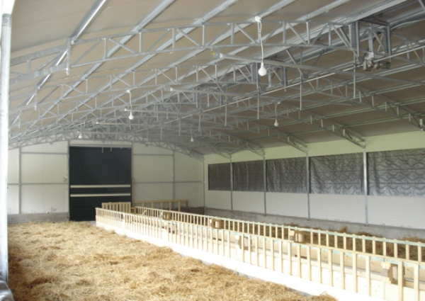 Toll-type sheep shed